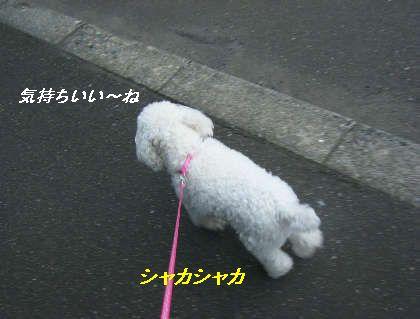 2008_09060030.jpg