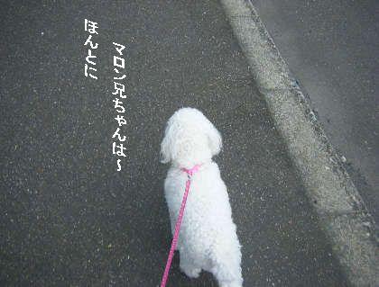 2008_09060035.jpg