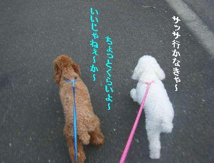 2008_09060037.jpg