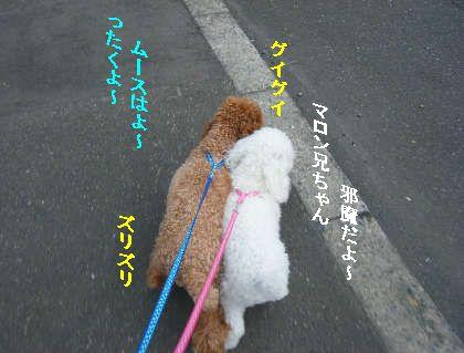 2008_09060038.jpg