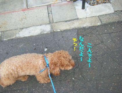 2008_09060041.jpg
