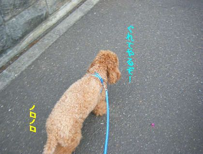 2008_09060042.jpg