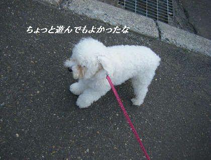 2008_09060048.jpg
