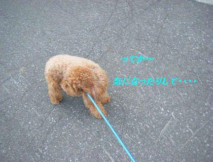 2008_09060051.jpg