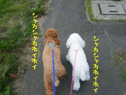 2008_09060061.jpg