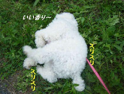 2008_09060071.jpg