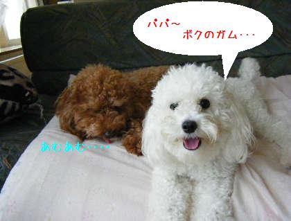 2008_09070002.jpg