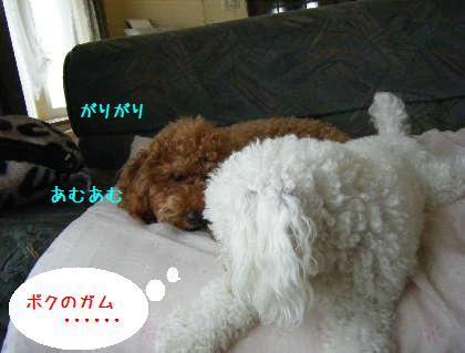 2008_09070003.jpg
