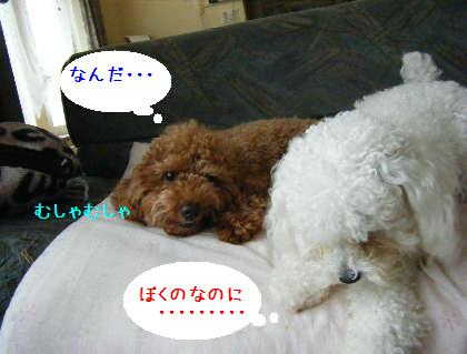 2008_09070004.jpg