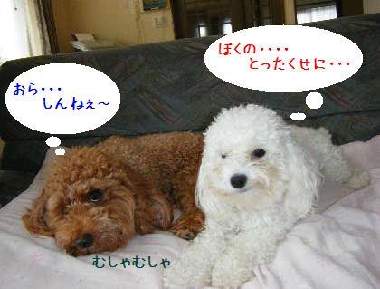 2008_09070005.jpg
