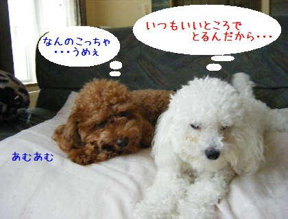 2008_09070007.jpg
