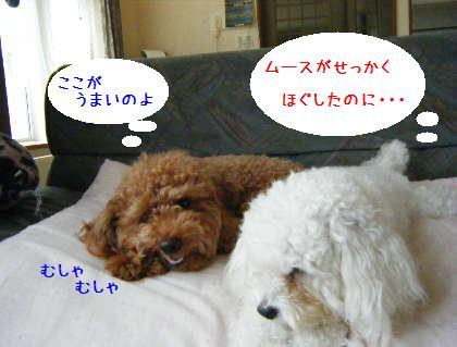 2008_09070008.jpg