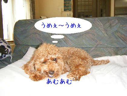 2008_09070009.jpg