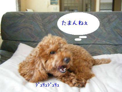 2008_09070010.jpg