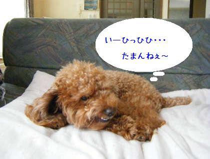 2008_09070011.jpg