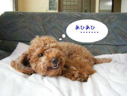 2008_09070014.jpg