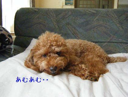 2008_09070017.jpg