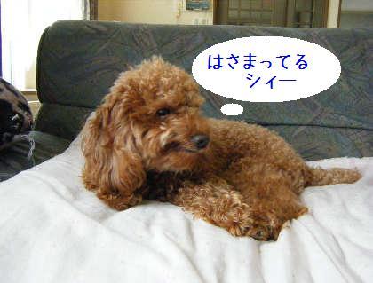 2008_09070019.jpg