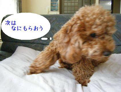 2008_09070023.jpg