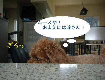 2008_09070026.jpg