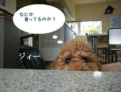 2008_09070030.jpg