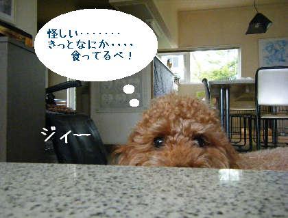 2008_09070031.jpg