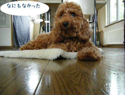 2008_09070033.jpg