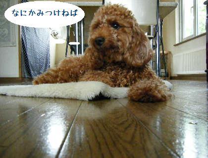 2008_09070034.jpg