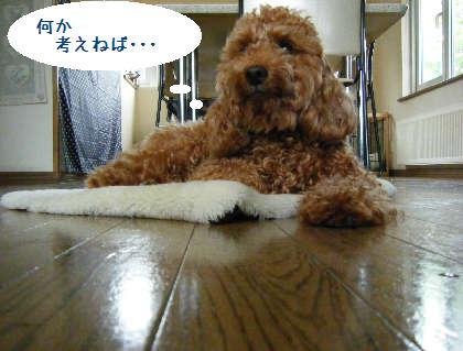 2008_09070036.jpg