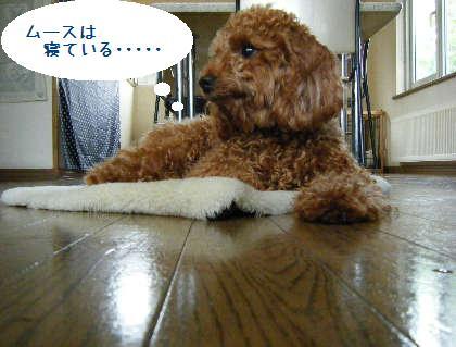 2008_09070037.jpg
