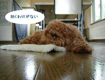 2008_09070051.jpg