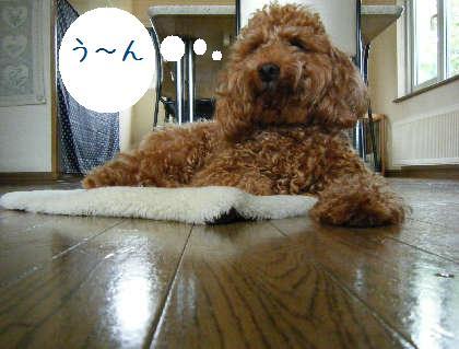 2008_09070056.jpg