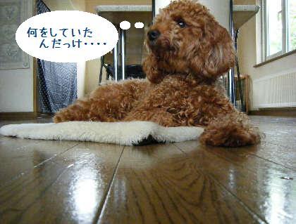 2008_09070058.jpg