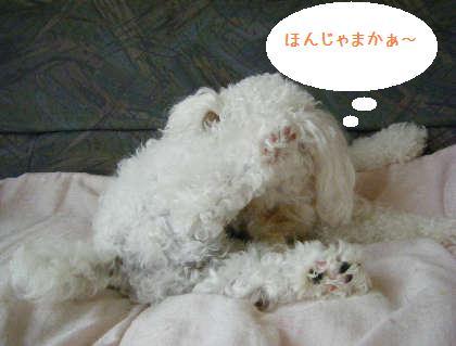 2008_09070063.jpg