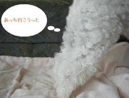 2008_09070069.jpg
