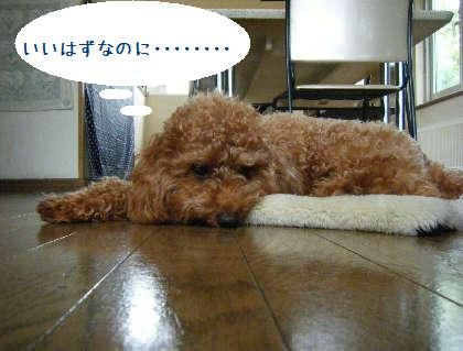2008_09070078.jpg