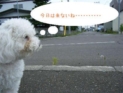 2008_09070087.jpg