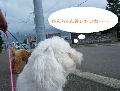2008_09070088.jpg