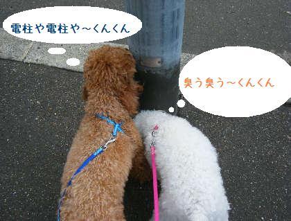 2008_09070089.jpg