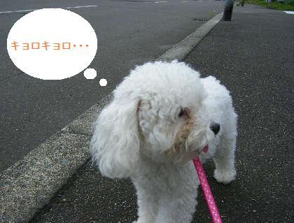 2008_09070091.jpg