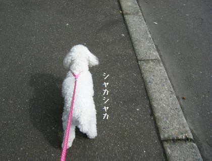 2008_09070092.jpg