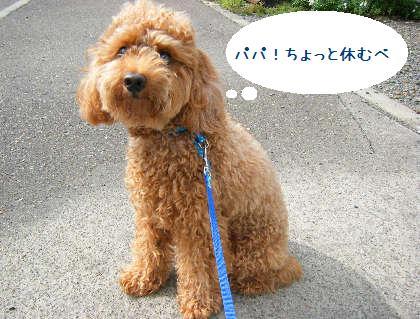 2008_09070095.jpg