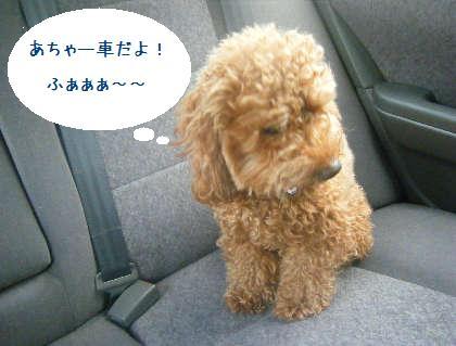 2008_09130010.jpg