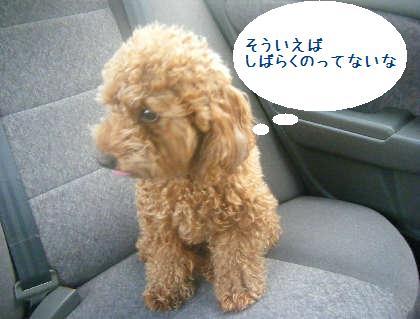 2008_09130011.jpg