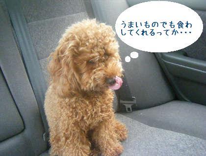 2008_09130013.jpg