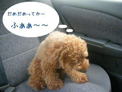 2008_09130017.jpg