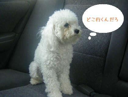 2008_09130022.jpg