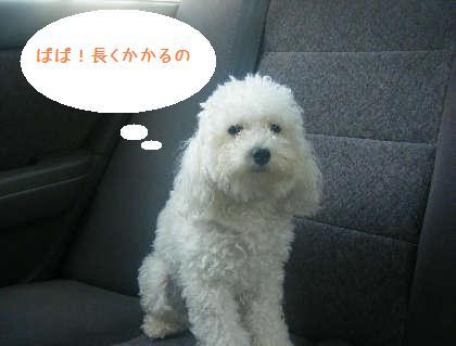 2008_09130024.jpg