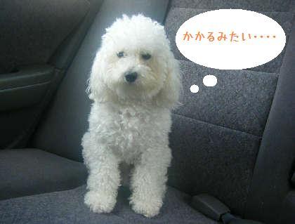 2008_09130025.jpg