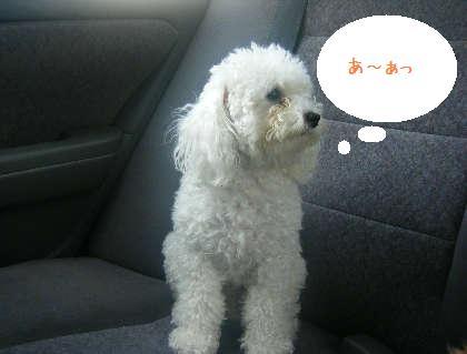 2008_09130026.jpg